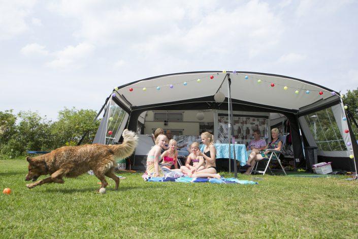 Kamperen met hond op een 5 sterren camping!